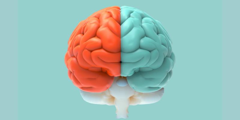 Efecto Bouba-Kiki: Mucho más que formas y sonidos. Imagen obtenida de: https://www.bloghoptoys.es/wp-content/uploads/2020/02/cerveau.png